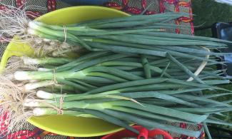 bundles of green onions from D-Town Farm.